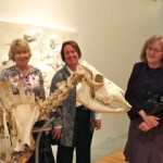 Pictured L - R Karen Tinkler, Michelle Elkins and Dede Brokesh inspecting the bovine skeleton.
